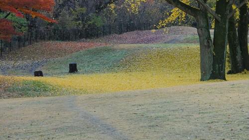 [4K] Autumn Leaves / Fall Colors - Nogawa Park (Tokyo)