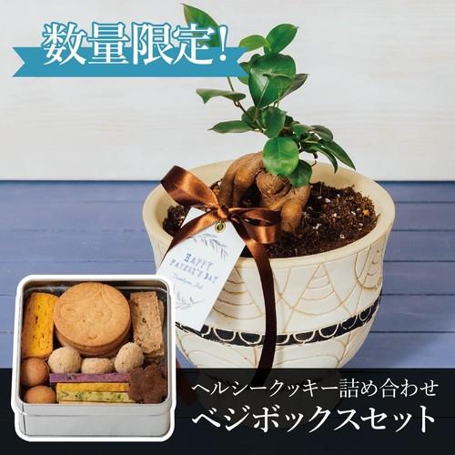 【父の日限定】ガジュマルの木+ベジボックス