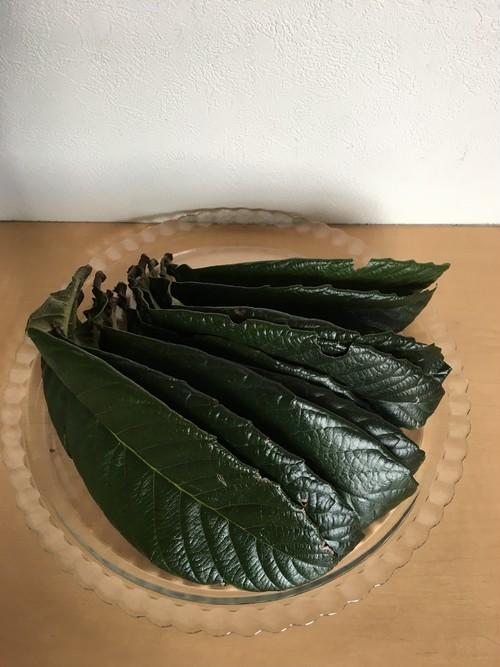 国産無農薬 ビワの葉 30枚