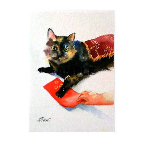 台湾ポストカード 水彩猫「無題」