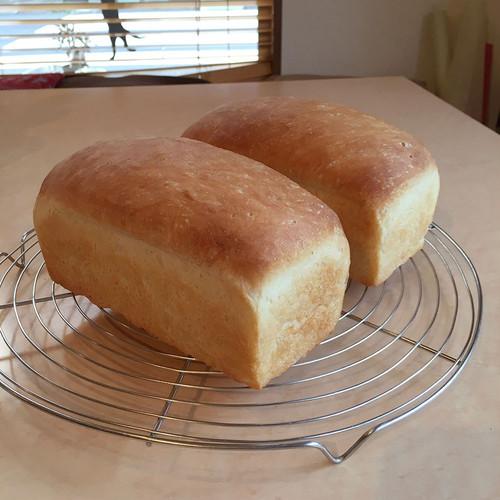 ミニ食パン1斤