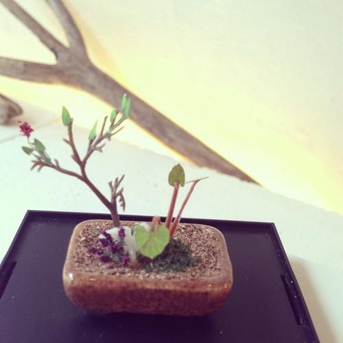 【THE BONSAI】角鉢寄せ植え(茶)