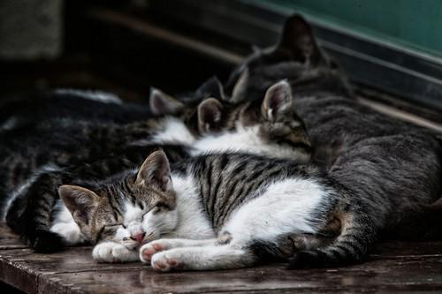 STREET CATS 00100