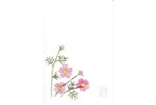 A33 秋桜