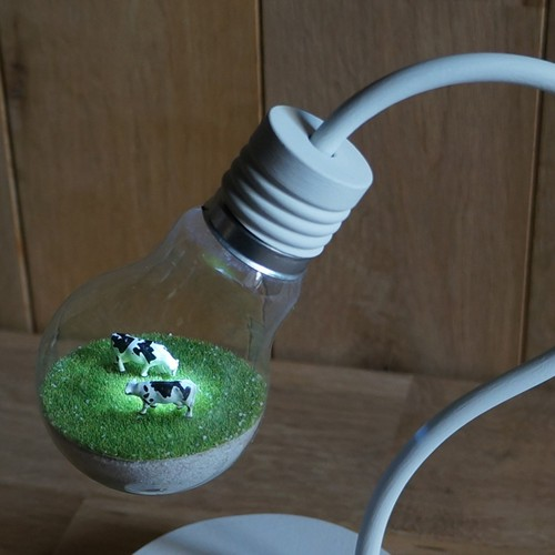 bulb terrarium mini white