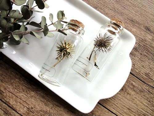 植物標本 Botanical Collection■No.39 オヤマボクチ