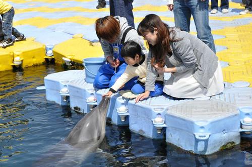 【地元のおすすめスポット】イルカと遊ぶ!「サポーターズチケット」【限定販売】日本ドルフィンセンターの商品画像3
