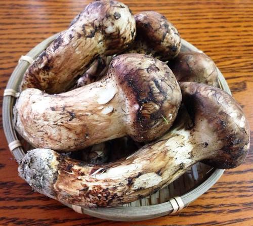 ブータン生松茸300gセット