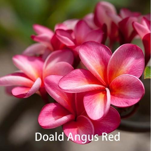 Donald Angus
