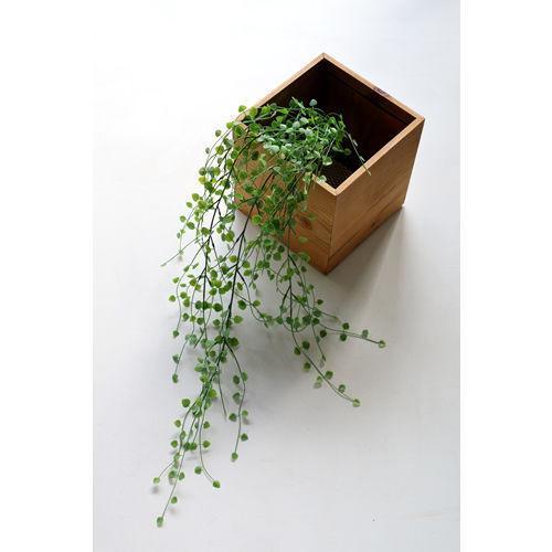 小さな葉っぱが可愛いハートカズラ 099-FG2448
