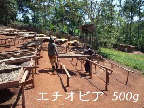 エチオピア モカ イルガチェフェ コンガ 浅煎り 500g