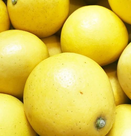 贈答用に人気。上品な甘味!天草産 パール柑橘 3玉入り