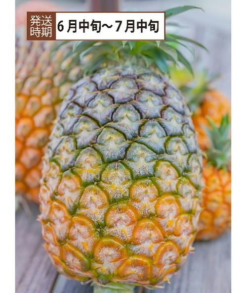 【コロナ緊急支援】沖縄県西表島産 島パイン 「4Kg」