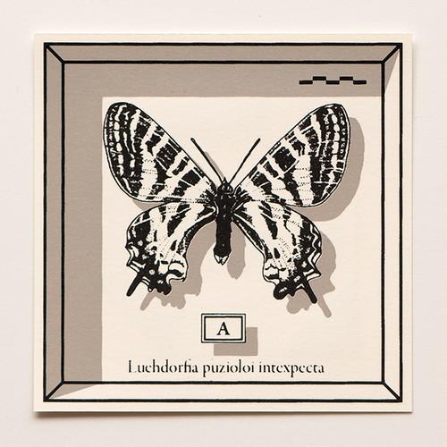 蔵書票ブックマーク 標本箱シリーズ 「А: ヒメギフチョウ」