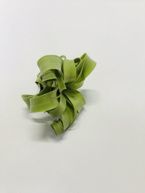 [Tillandsia]streptophylla ティランジア ストレプトフィラ