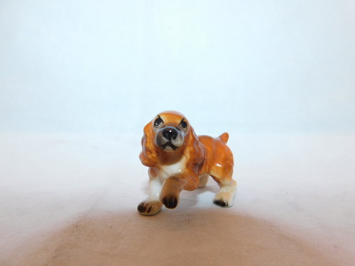 ミニコッカスパニエル 犬  mini porcelain cocker spaniel dog