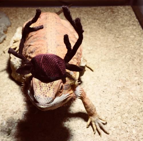 トナカイの帽子 M