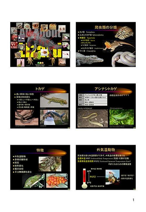 プライベートセミナー:爬虫類の臨床:トカゲ(ハンドアウト)