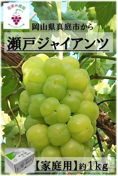 瀬戸ジャイアンツ 1kg【家庭用】