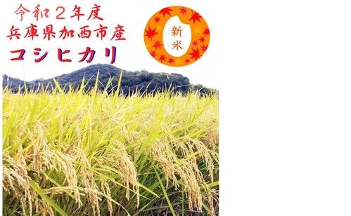 【送料無料】令和2年新米 兵庫県加西市産 新米コシヒカリ 30kg