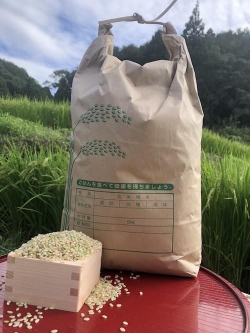 【玄米5kg】愛媛 自家農園減農薬栽培あきたこまち令和2年産新米!