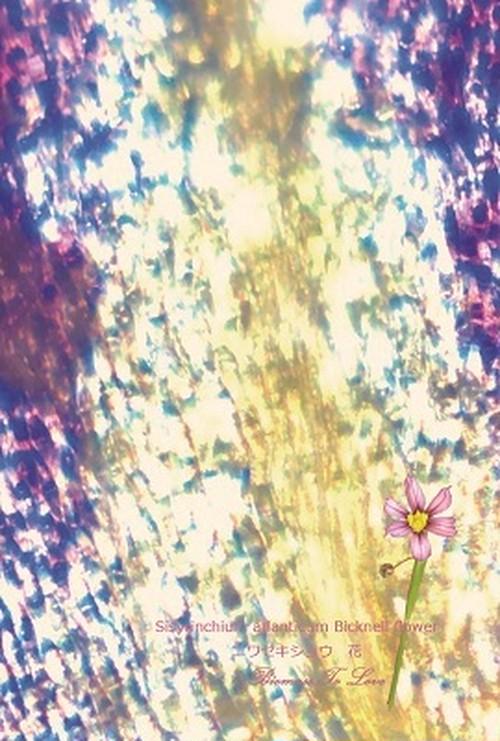 いきもの顕微鏡ポストカード ニワゼキショウ 花
