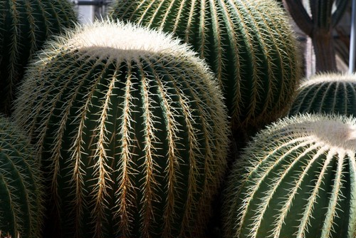 plants_IMG_6027.dng