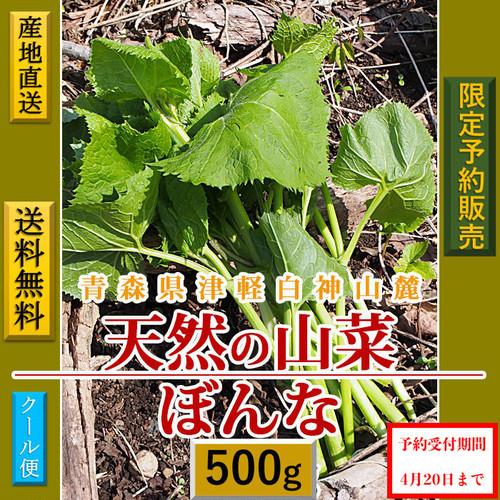 【天然山菜】【天然ぼうな/500g】自然の恵み 限定予約販売 青森県白神山麓便 【送料無料】