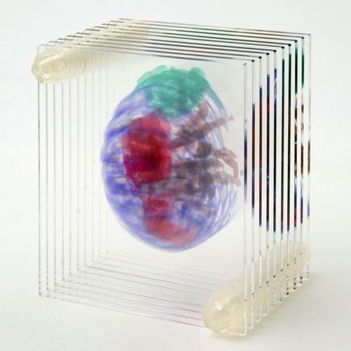 3D透明標本 ダンゴムシ ネジ 3Dデータ収録USBメモリ付