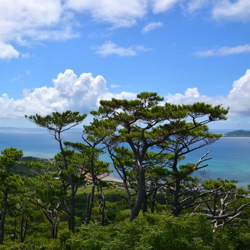 [お香] 琉球松香 (mapé NO.3) / Incense Ryukyu Island Pine