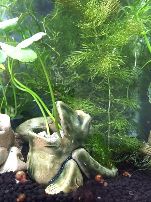 Z9 カエル水草鉢