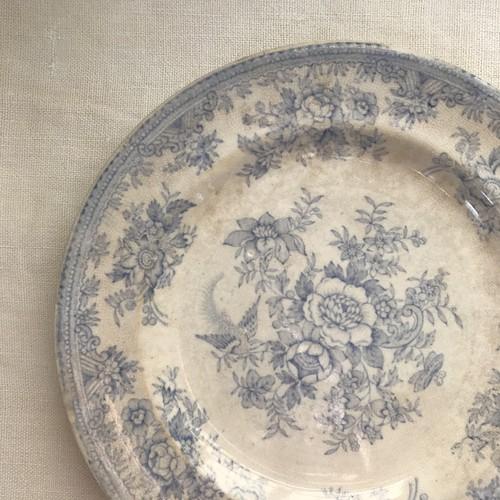 アジアティックフェザンツ柄のお皿 21.5cm