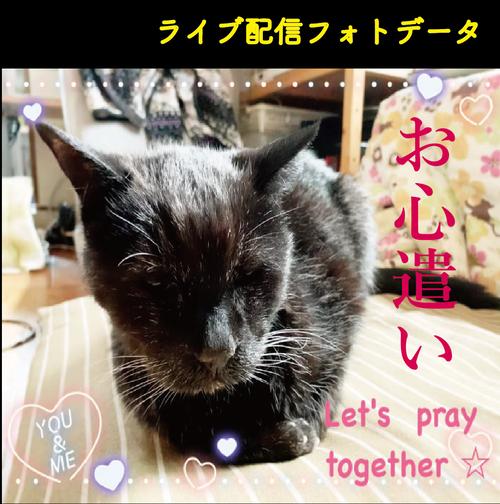 お心遣い②(ポストカード2枚)