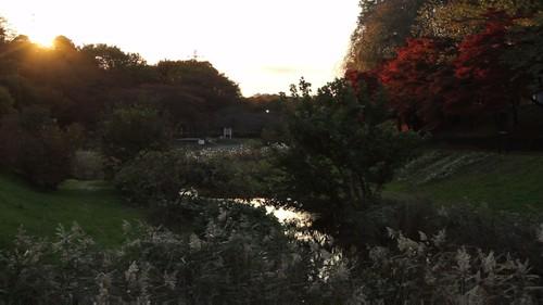 Morning / Sunrise / Autumn - Nogawa River / Musashino Park (Tokyo)
