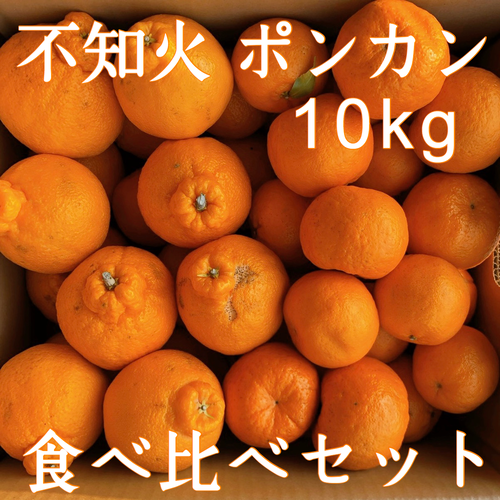送料無料 不知火&ポンカン 食べ比べ 家庭用10kg 熊本県産