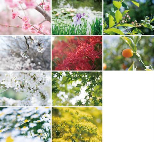 花と緑のポストカード2018(10枚セット)