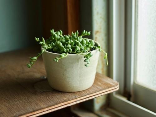白橡釉 植木鉢