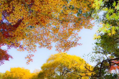 Autumn leaves-3