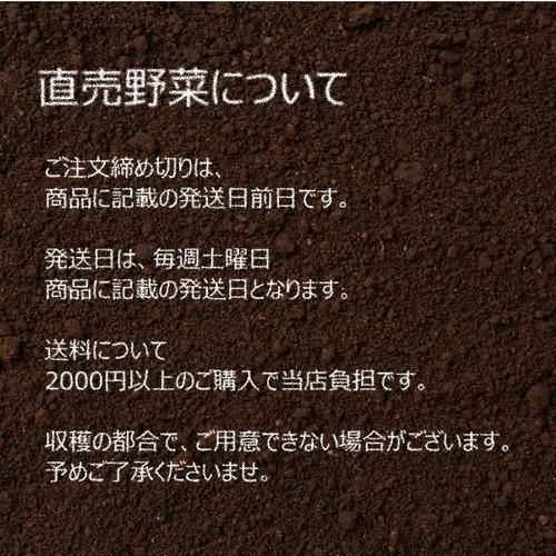 11月の朝採り直売野菜 : ネギ 3~4本 新鮮な秋野菜 11月14日発送予定
