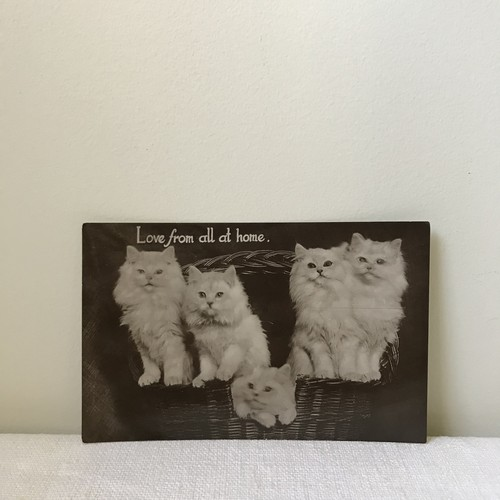 猫のポストカード7