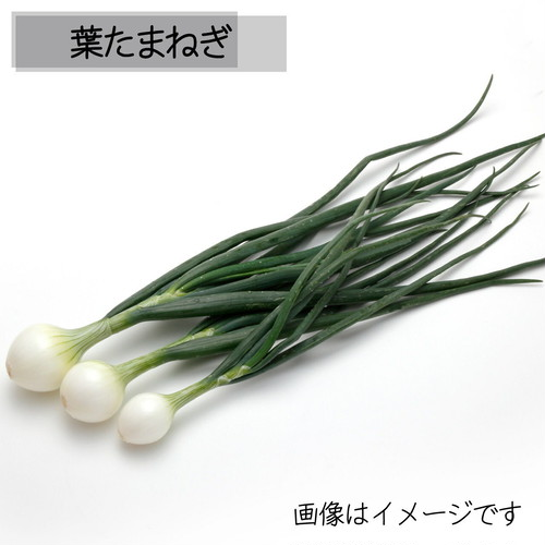 5月の朝採り直売野菜:葉たまねぎ 3~4本 5月18日発送予定