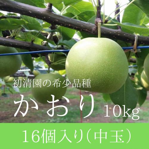 【希少な芳醇梨】かおり中玉 16個入り 10kg