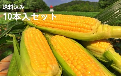 【花畑応援】とうもろこしギフト【10本入】広島県 世羅産