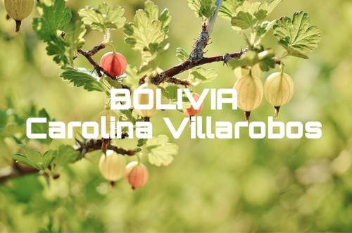 ボリビア/キャロライナ ビラロボス