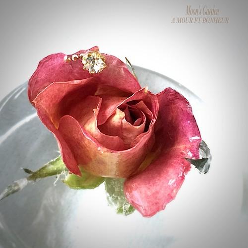 ブローチ 薔薇『モニーク・ルストゥールネール』シックで落ち着きのあるスカーフピン&ブローチ【serial number0122】