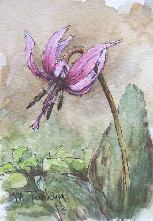 「カタクリの花」
