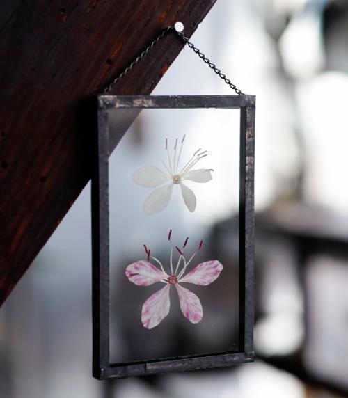 植物絵画:押し花『野草 ユキノシタ』ホワイト