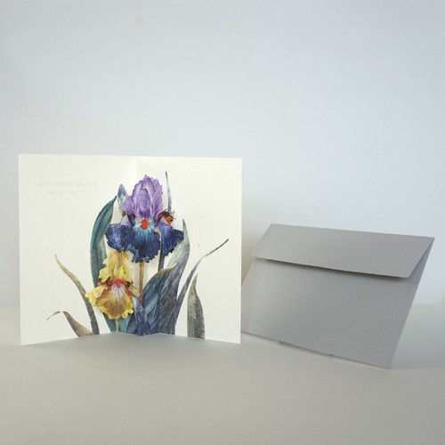 "greeting card""German Iris"""