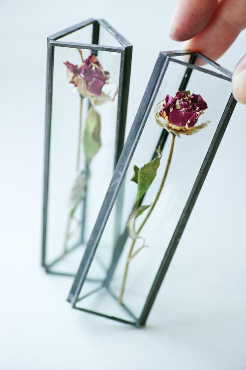 ◆抽選◆お在庫2点・△植物標本:ドライフラワー〚ローズ マーブルピンク〛