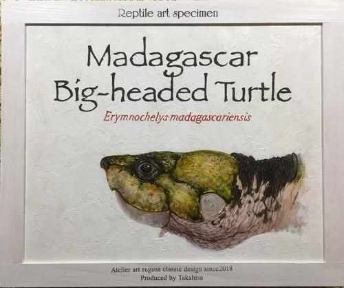 マダガスカルヨコクビガメ